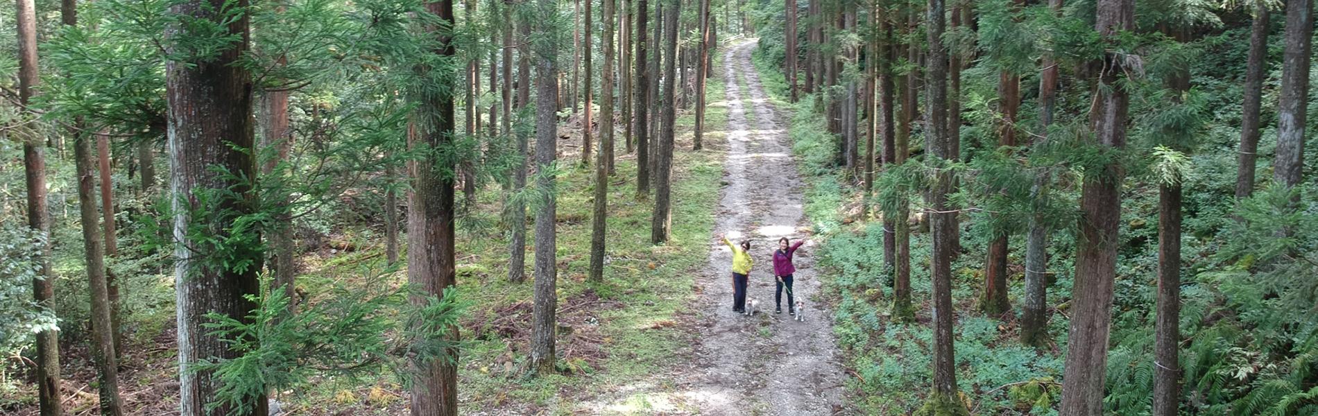 GO! Forest ワンコと冒険に出かけよう ワンコの森あそび体験会