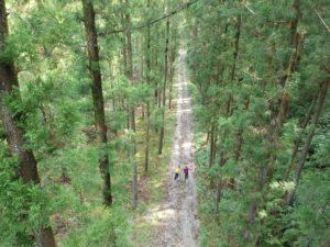 林道ハイクの写真