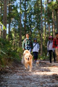 ワンコの森あそび ハイキングコースイメージ写真